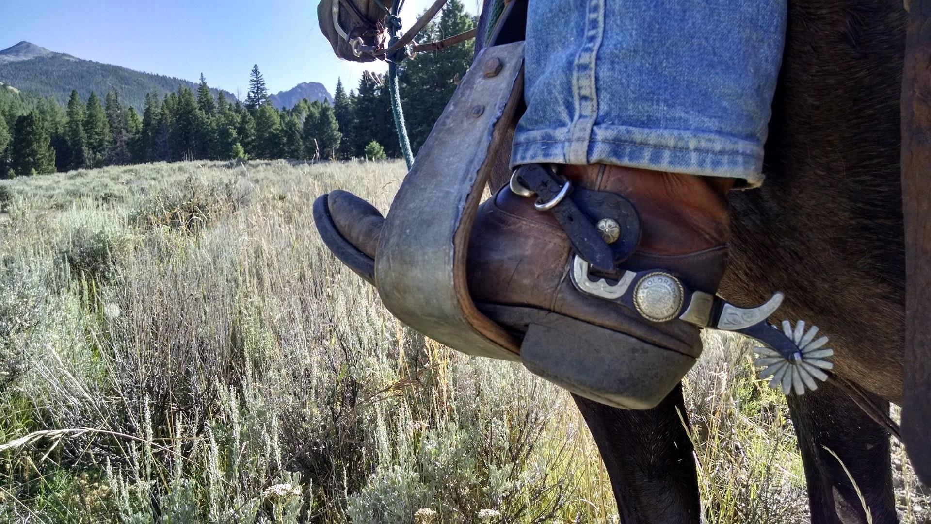 Chaussure de vedette